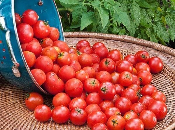 Щедрый урожай без подкормки не получить
