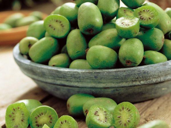 Съедобные плоды актинидии