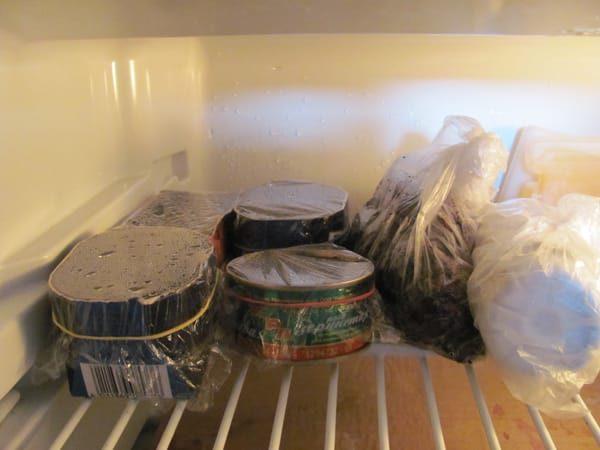Семена закаливают в холодильной камере