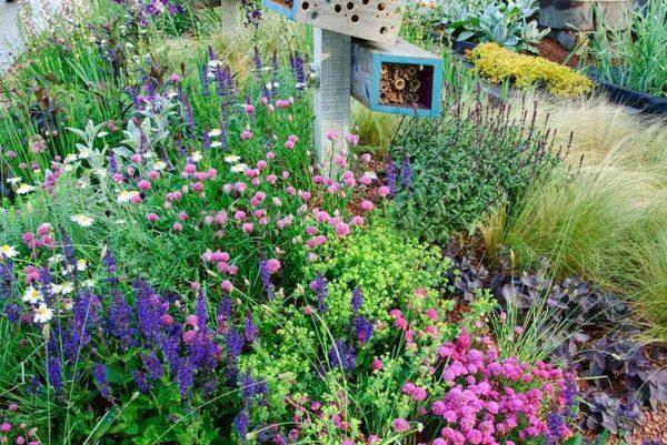 Скабиоза в соседстве с другими цветами
