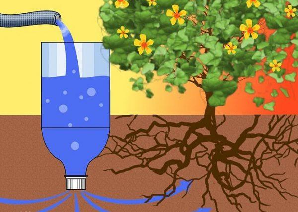 Схема системы капельного полива растения, которую можно сделать своими руками