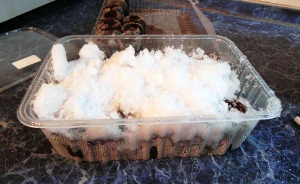Стратификация семян клубники