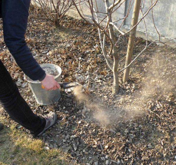 Удобрение почвы древесной золой