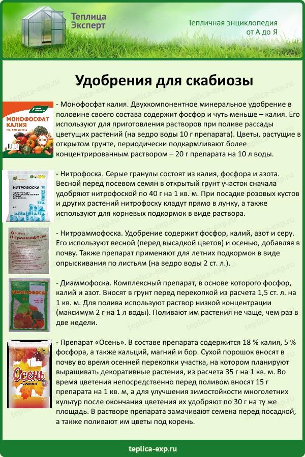 Удобрения для скабиозы