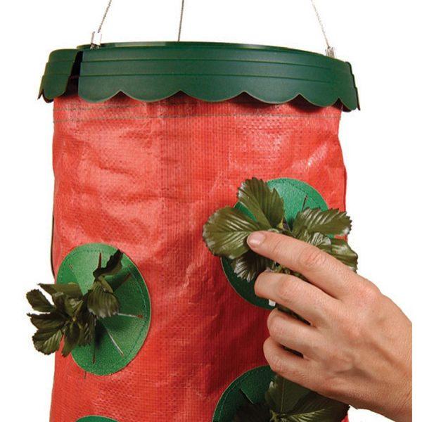 В продаже есть уже подготовленные мешки для клубники