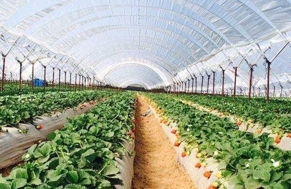 Бизнес в теплицах позволит иметь урожай круглый год