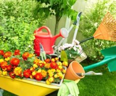 Какой инвентарь и приспособления нужны для ухода за растениями в теплице