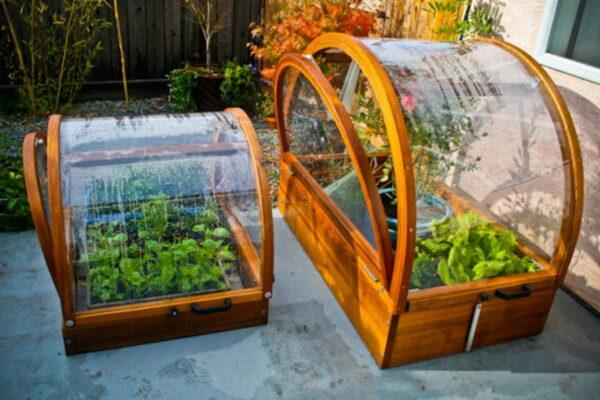 Парник помогает не только выращивать дома растения, но и подготавливать рассаду