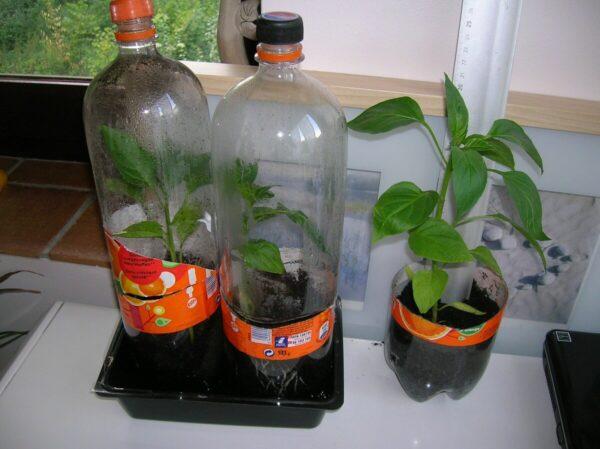 Праник из пластиковых бутылок