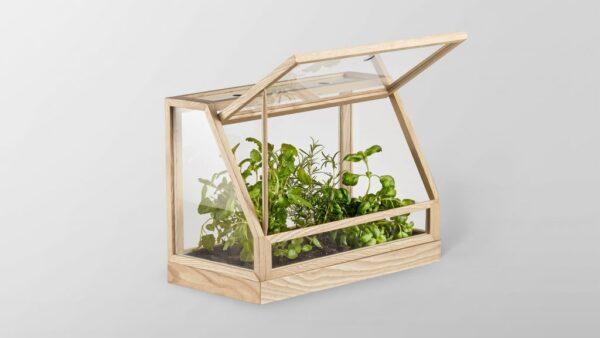Прозрачные стенки в мини-теплице обеспечивают доступ света к растениям