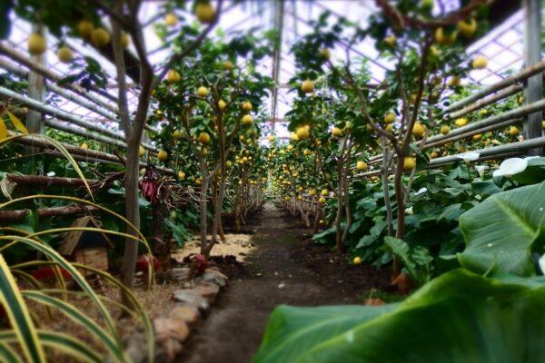 Тропическим растениям для правильного роста, развития требуется большое количество жидкости