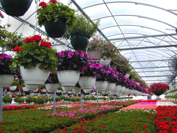 Выращивание цветов в парнике - прибыльный бизнес