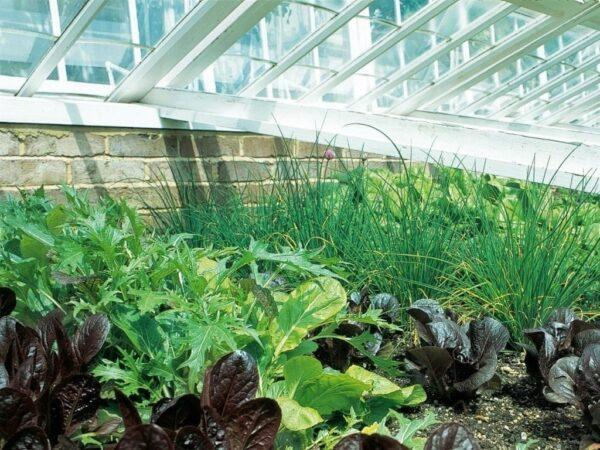 Зелень в теплице можно выращивать круглый год