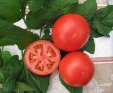 Как правильно собрать семена помидоров на рассаду