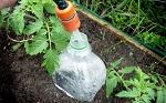 Капельный полив из пластиковых бутылок своими руками