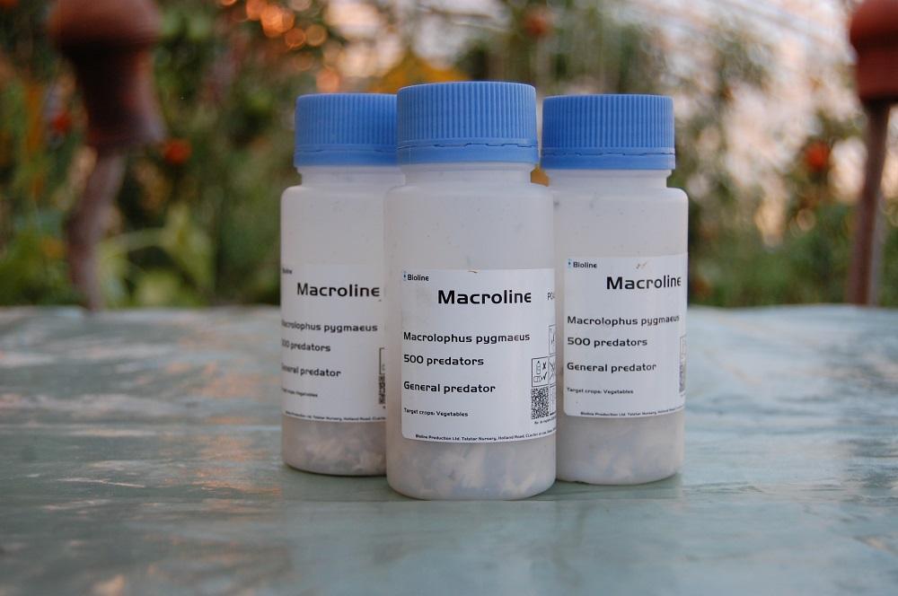 Контейнеры макролофусов