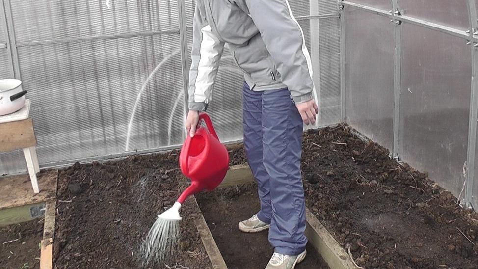 Почва проливается раствором медного купороса
