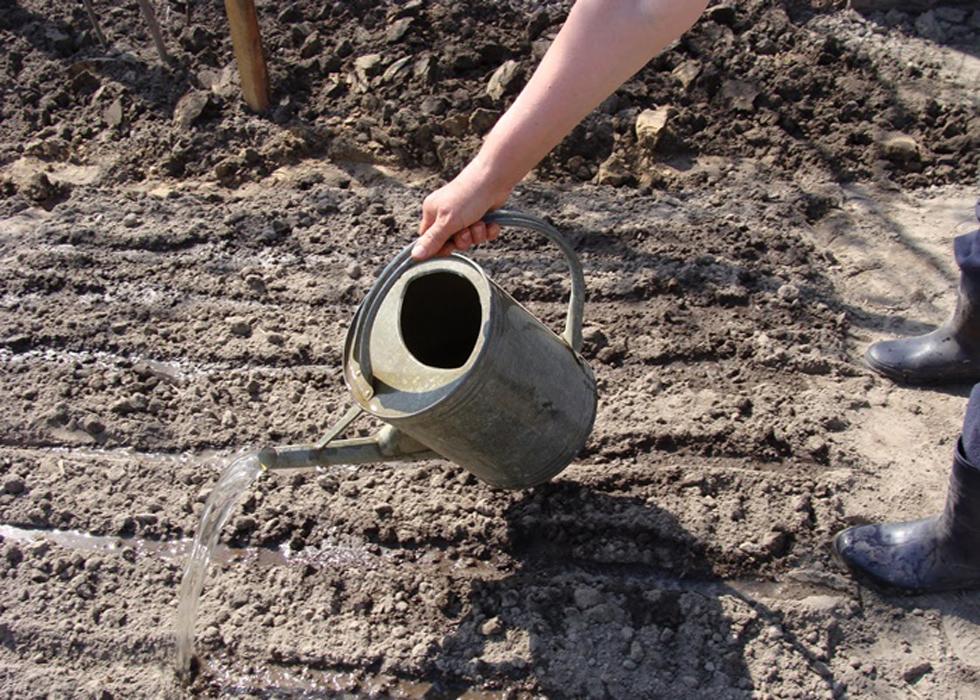 Полив почвы акарицидным раствором
