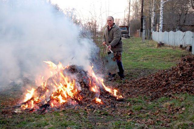Сжигаются остатки пораженных растений