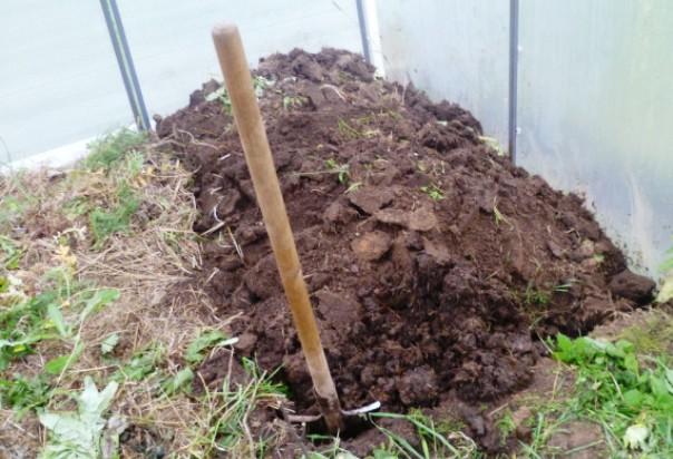 Тщательно перекопайте почву