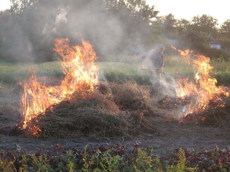 Всю растительность нужно сжечь