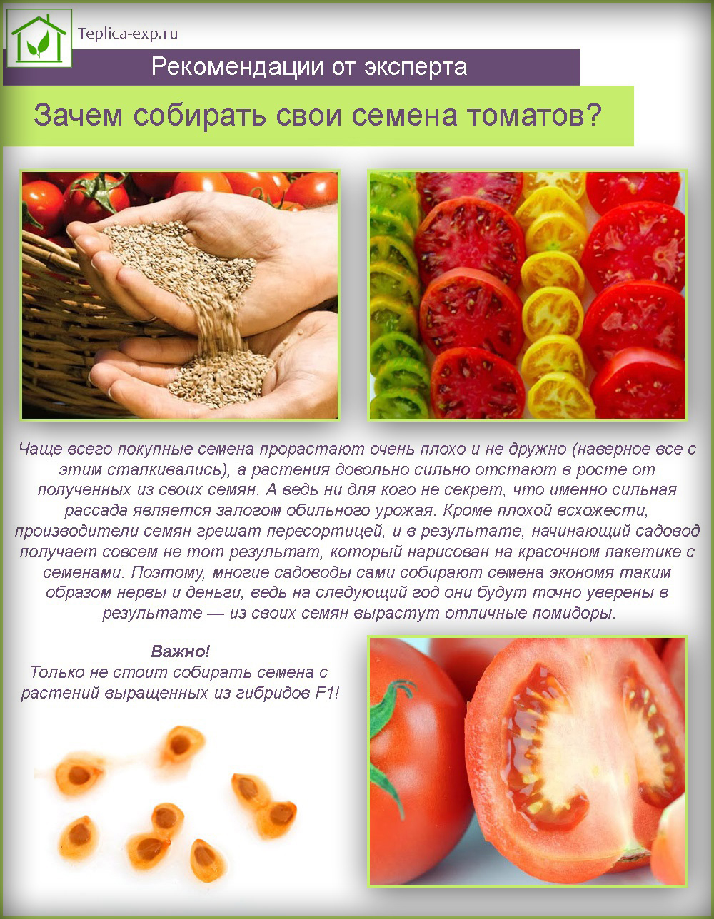 Зачем собирать свои семена помидоров