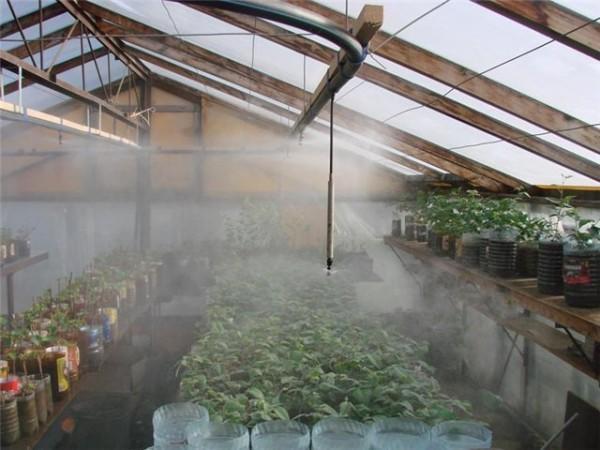 «Искусственный туман» для микроклимата в теплице