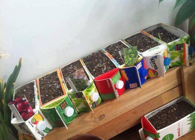 Использование тетрапаков для выращивания рассады