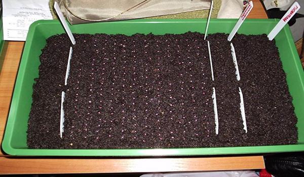 Семена посажены в почву