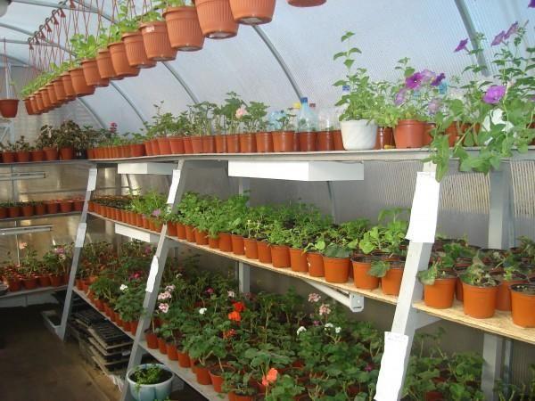 Стеллажи и кашпо для растений в обустройстве теплицы