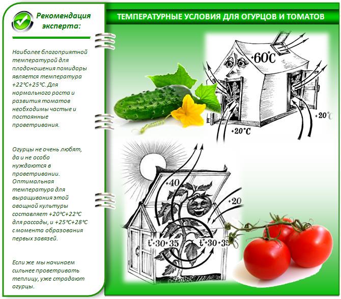 Условия выращивания помидора и огурца в теплице