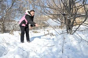 Укрытие деревьев и кустарников снегом