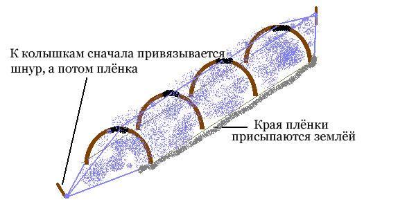 Конструкцию укрепляем с помощью соединения следующих дуг шнуром, который будет привязан к колышкам, на концах тоннеля. После этого натягиваем пленку, которую по бокам присыпаем землей, а на концах, также привязываем к колышкам