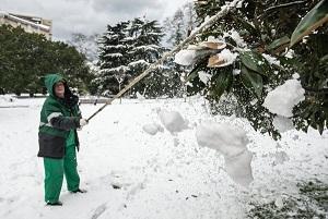 Сбивание снега и наледи с веток