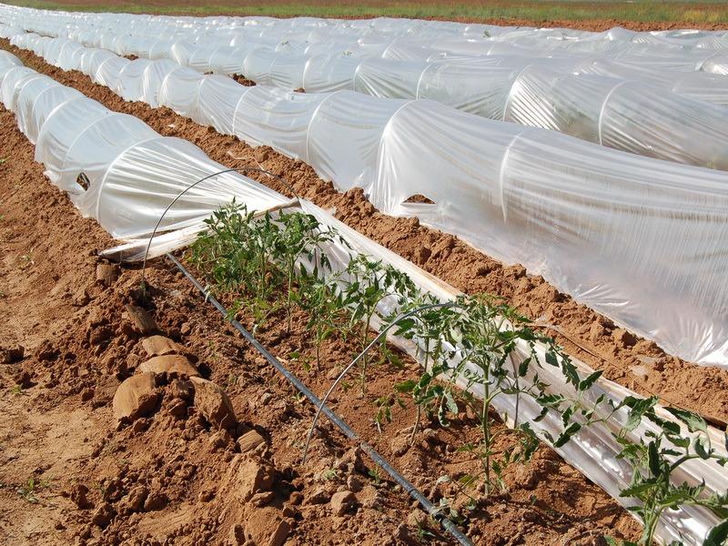 Абсорберы снижают прозрачность покрытия в летнее время