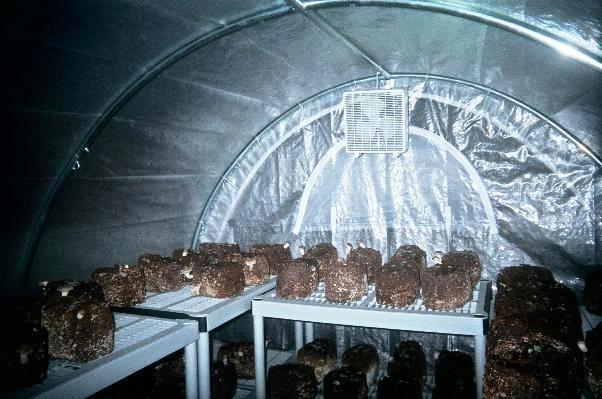 Дополнительное укрытие в теплице поможет сэкономить на отоплении