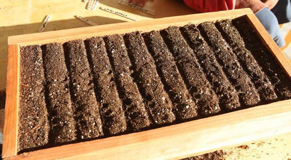 Если используете большой ящик, высаживайте семена в такие борозды