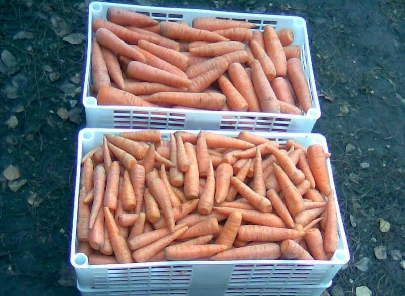 Хранение моркови в ящиках