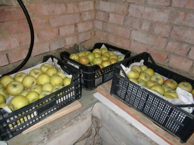 Хранение яблок в январе