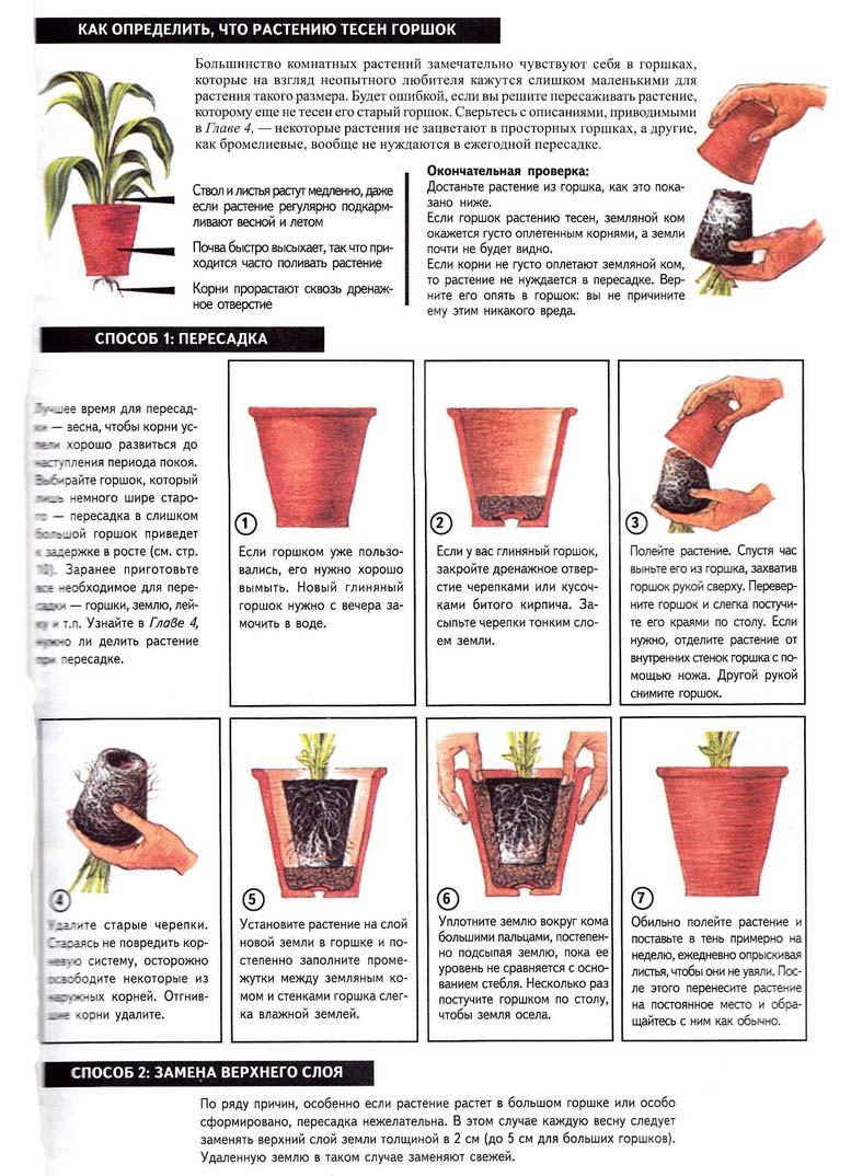 Как сажать комнатные цветы в горшок 9