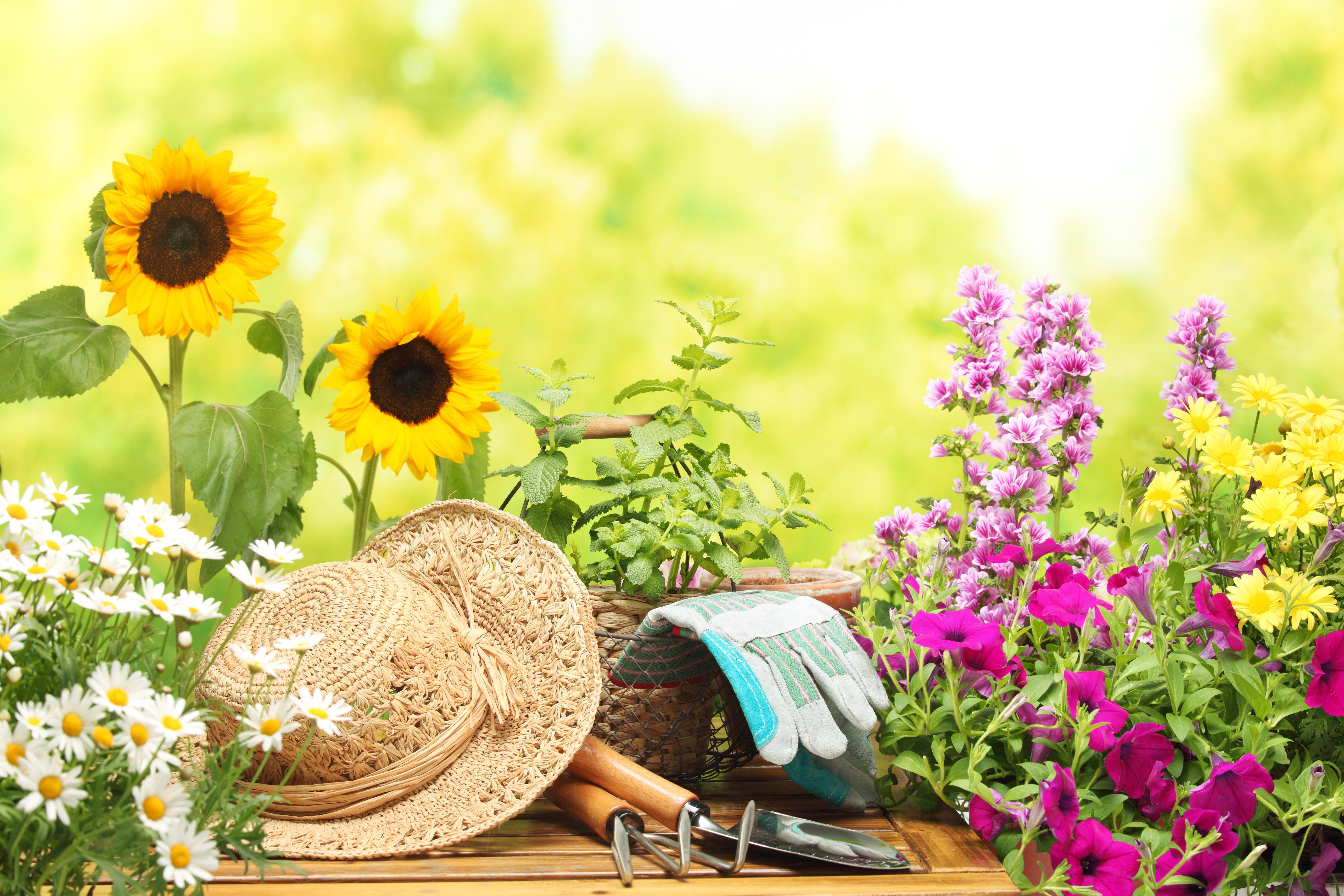 Не забывайте регулярно очищать садовый инвентарь, даже если вы проводили работы возле здоровых растений