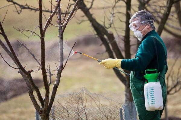 Опрыскивание деревьев и кустарников