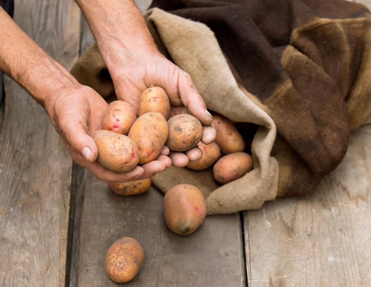 Овощи в погребе необходимо осмотреть и перебрать