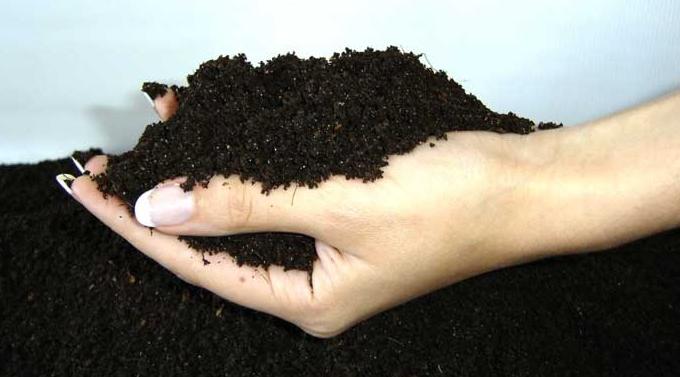 Почва на участке должна быть плодородной