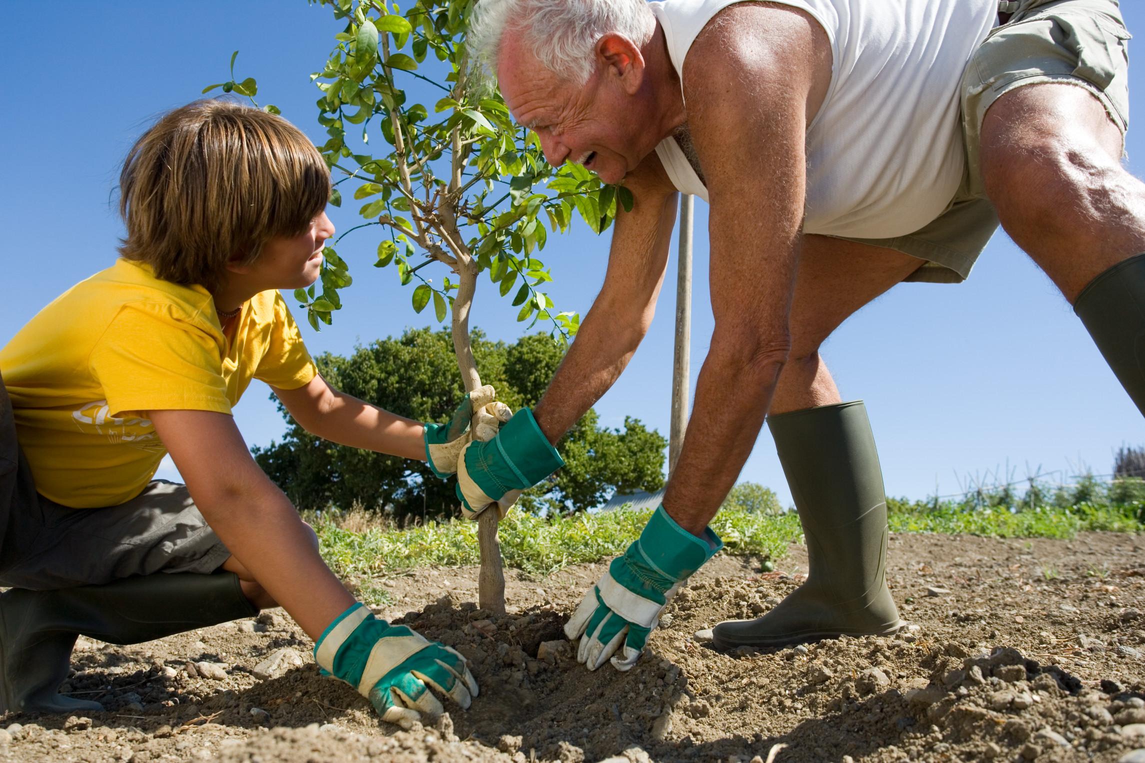 Почву вокруг стволов плодовых деревьев и кустарников нужно тщательно прорыхлить