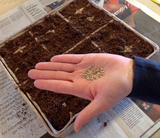 Когда семена на рассаду помидоры 673