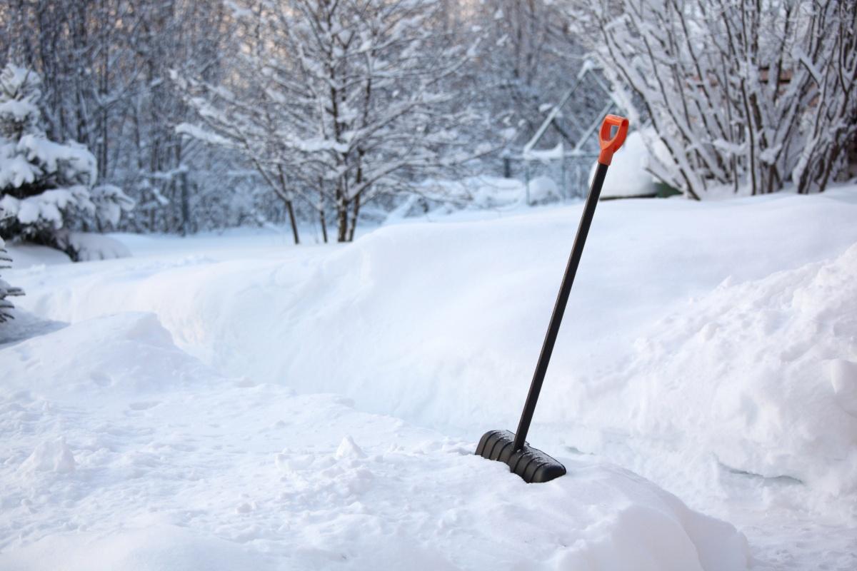 Прикопанные саженцы полностью закрывают снегом