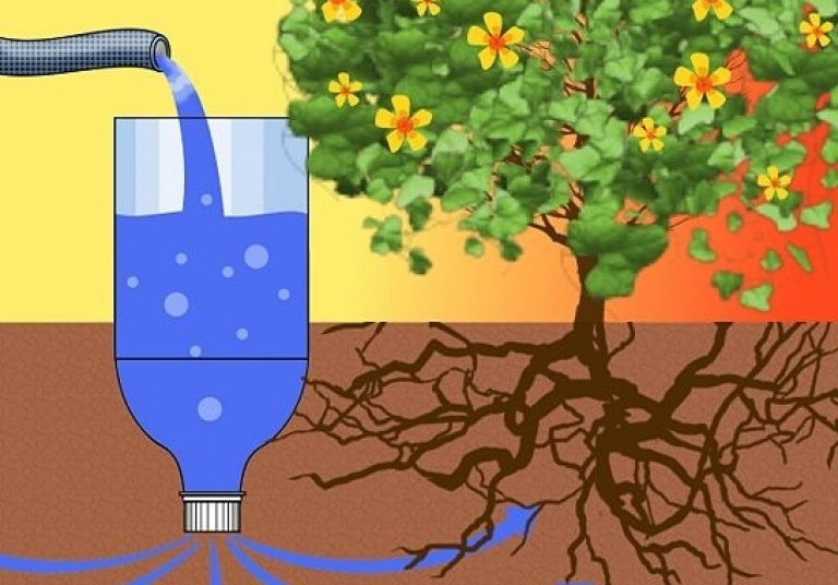 Рисунок, иллюстрирующий принцип работы капельного полива из бутылки