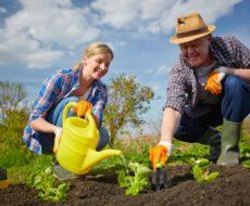 Садово-огородные работы в июне