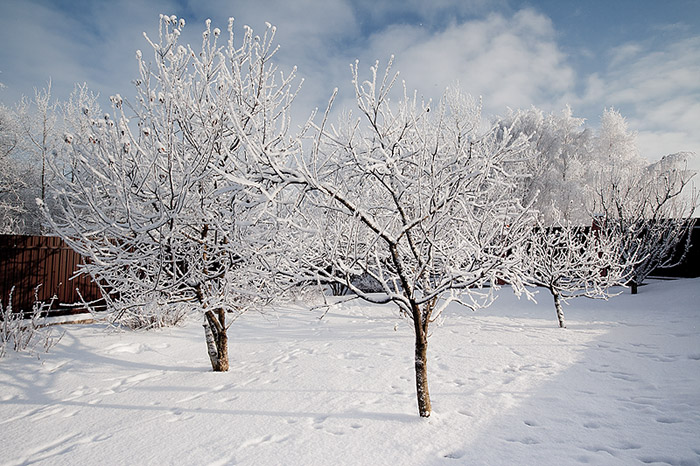 Садовые работы в декабре